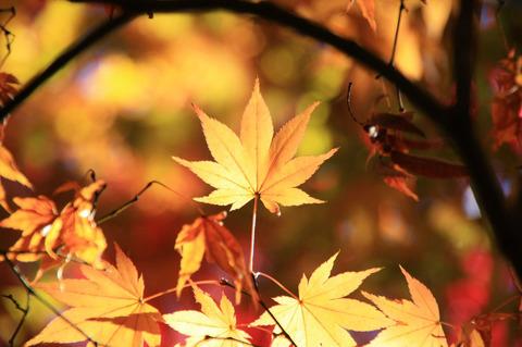 x2_20081125_028-bl.jpg