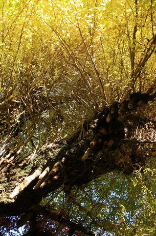 x2_20081125_159-bl.jpg